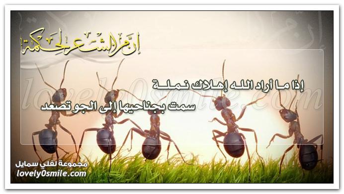 إذا ما أراد الله إهلاك نملة سمت بجناحيها إلى الجو تصعد