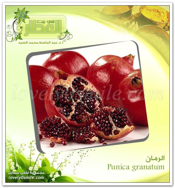 الرمان - Punica granatum