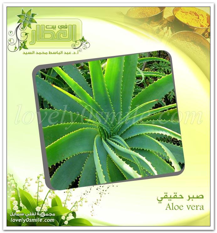 الصبر -  Aloe vera