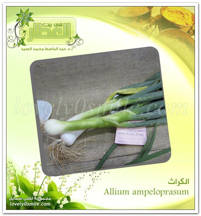 الكراث -Allium Ampeloprasum