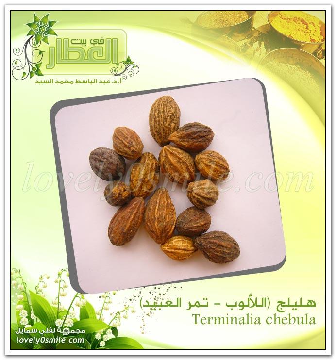 هليلج - اللالوب - تمر العبيد - Terminalia chebula