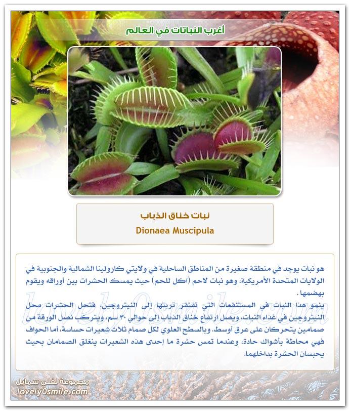 أغرب النباتات في العالم