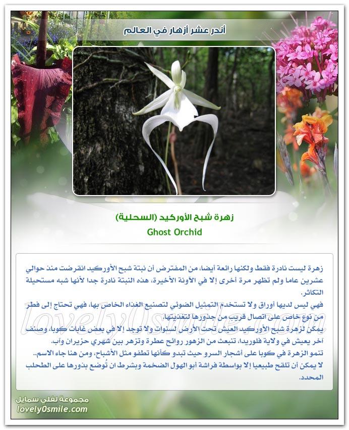 أندر عشر أزهار في العالم