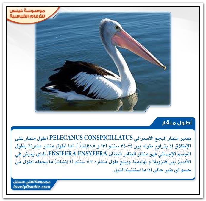 أعظم مقلد + أكثر الطيور تعطشاً للدماء + أكثر الطيور سمية + أضخم طير
