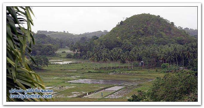 تلال الشوكولاته في جزيرة بوهول في الفلبين