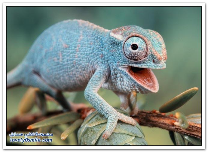 صور عالية الدقة لبعض الحشرات والزواحف والبرمائيات