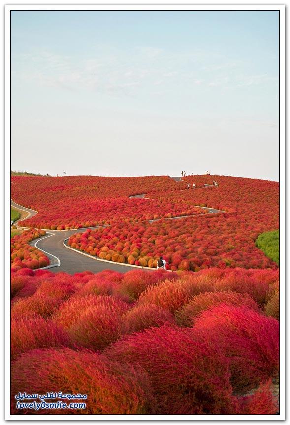 هيتاشي اليابان