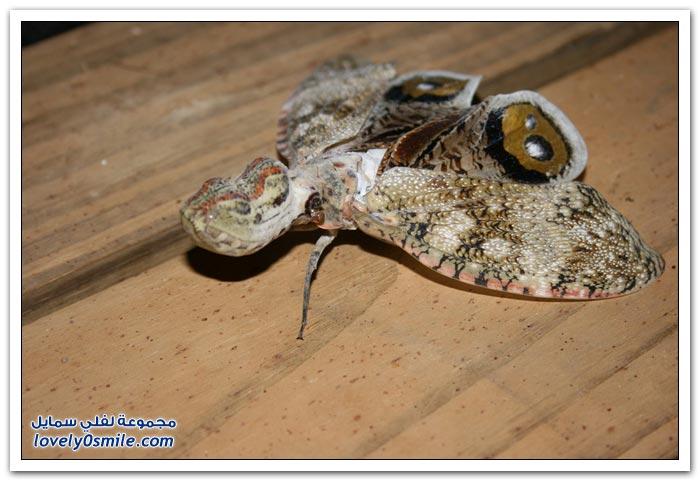 أنواع من الحشرات الاستوائية الكبيرة