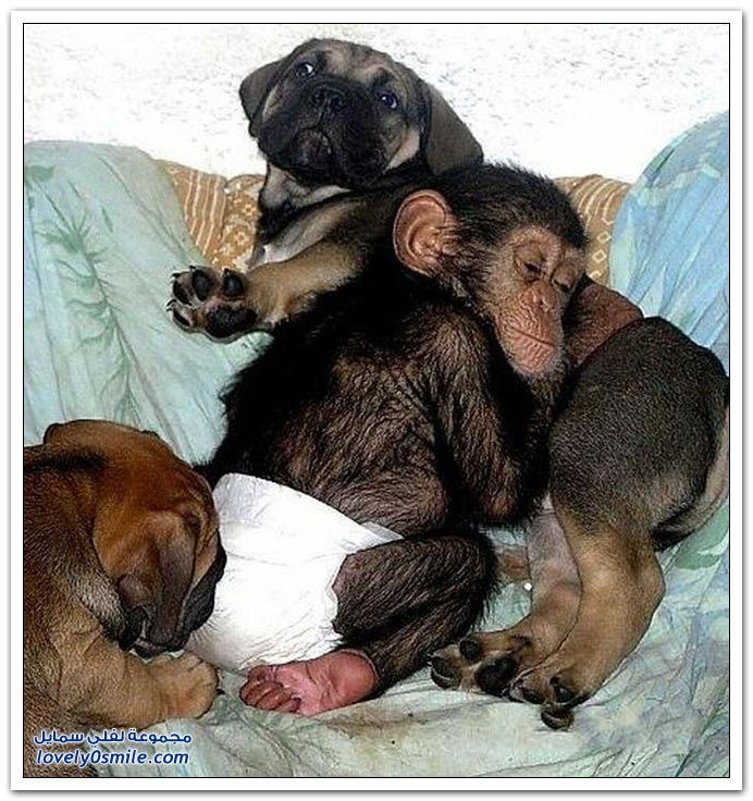صداقة غريبة بين قرد وكلب