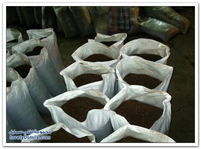 إنتاج الشاي في أبخازيا