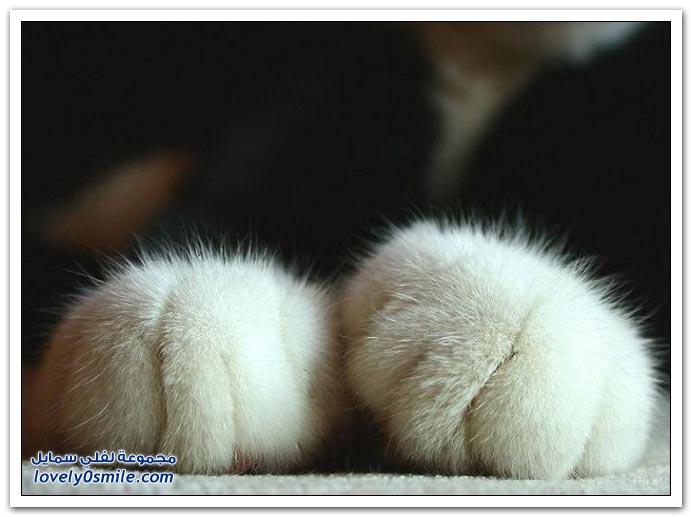 صور قطط ج3
