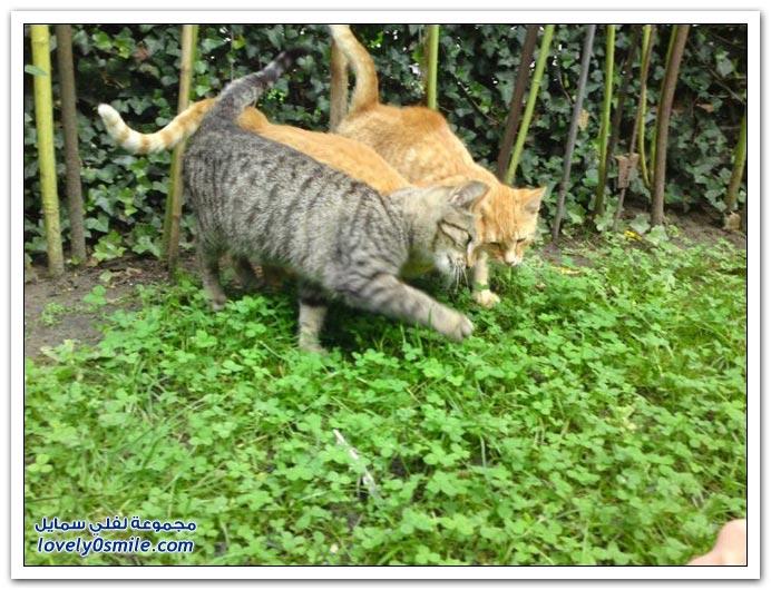 صور قطط ج4