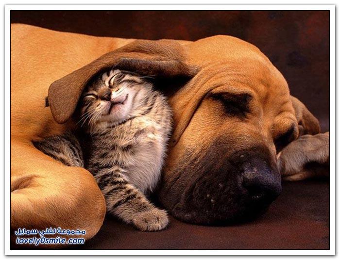 صداقة الكلب والقط