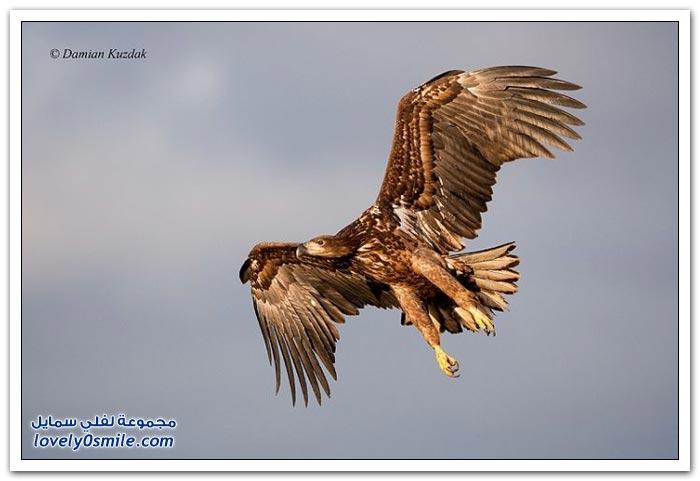 الاختباء لتصوير الحيوانات البرية Hide-a-way-to-pick-u