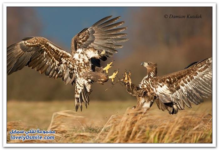 طريقة الاختباء لتصوير الحيوانات البرية