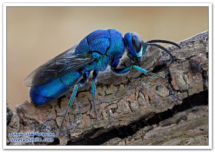 صور عالية الدقة لبعض الحشرات ج4