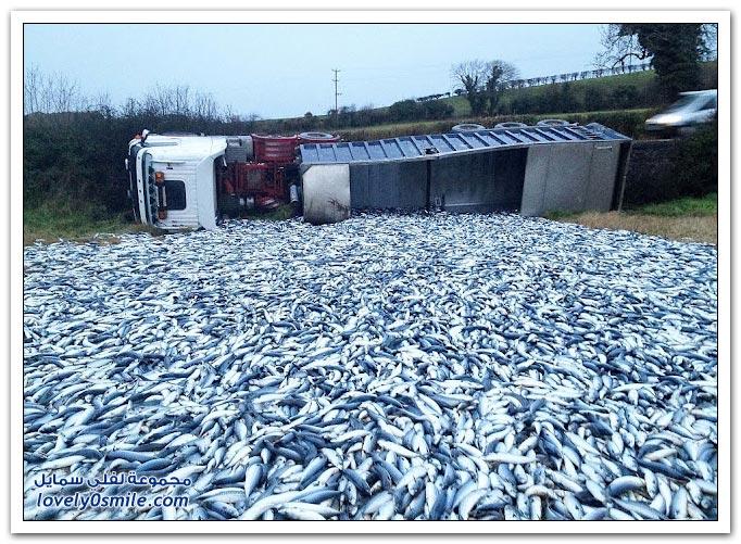 حادث انقلاب شاحنة تحمل 20 طن من أسماك السردين