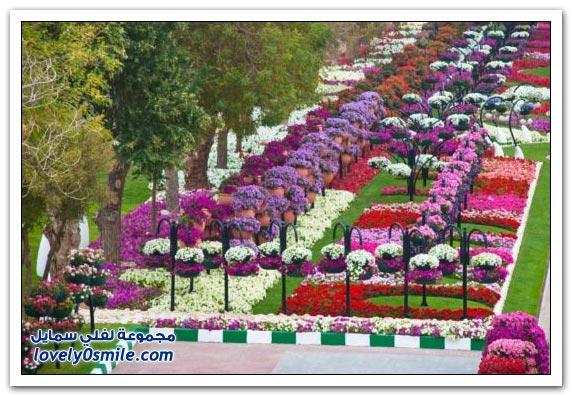 حديقة العين بارادايس في الإمارات التي دخلت موسوعة غينيس Hanging_flowers_08