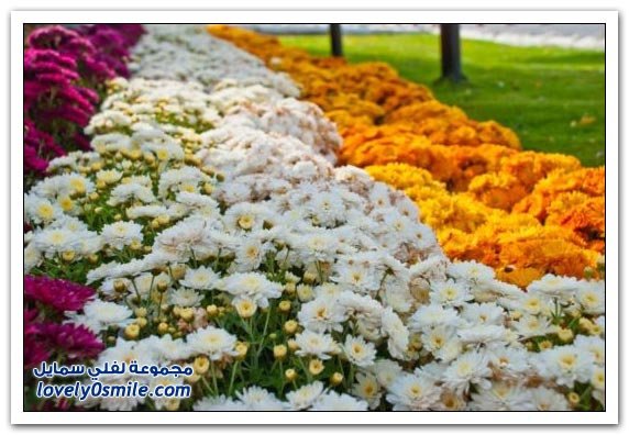 حديقة العين بارادايس في الإمارات التي دخلت موسوعة غينيس Hanging_flowers_10