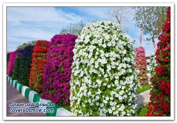 حديقة العين بارادايس في الإمارات التي دخلت موسوعة غينيس Hanging_flowers_11