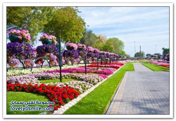 حديقة العين بارادايس في الإمارات التي دخلت موسوعة غينيس Hanging_flowers_12