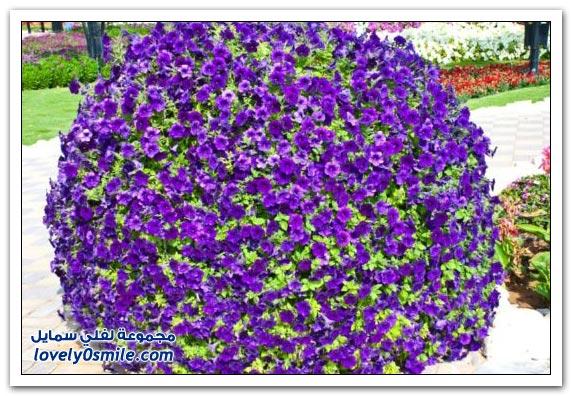 حديقة العين بارادايس في الإمارات التي دخلت موسوعة غينيس Hanging_flowers_14