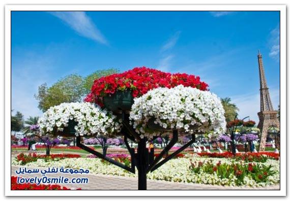 حديقة العين بارادايس في الإمارات التي دخلت موسوعة غينيس Hanging_flowers_17