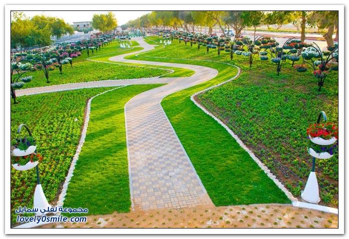 حديقة العين بارادايس في الإمارات التي دخلت موسوعة غينيس Hanging_flowers_22