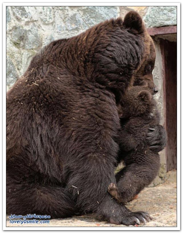 أم الدب زعلانة من ولدها شوفوا وشلون تأدبه
