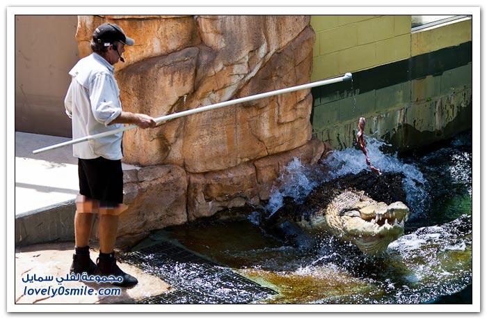 منتزه التماسيح في مدينة داروين بأستراليا