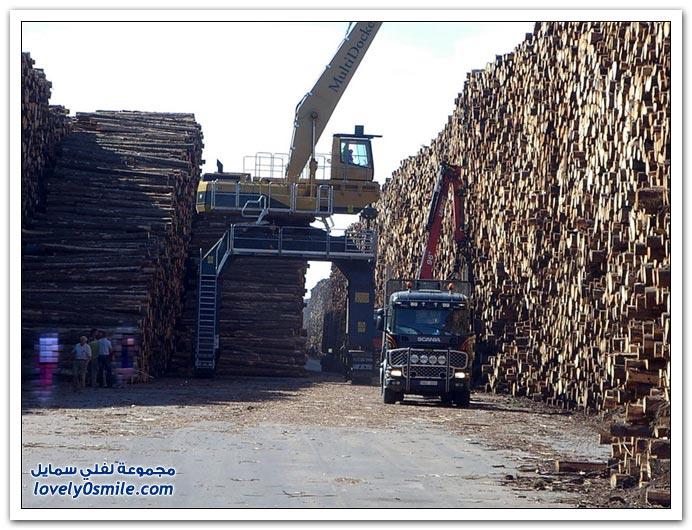 أكبر مخزن للخشب في العالم في الدنمارك والسويد