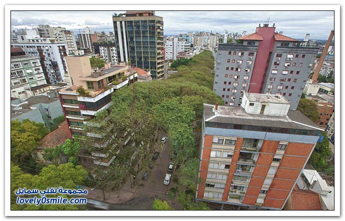 أكثر شارع تكثر فيه الأشجار في البرازيل