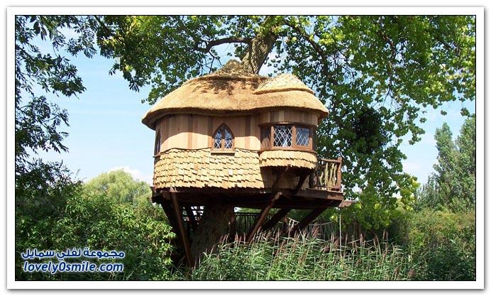 منزل في شجرة يباع بـ 250 ألف جنيه استرليني