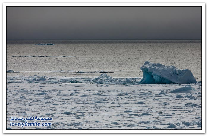 رحلة إلى القطب الشمالي