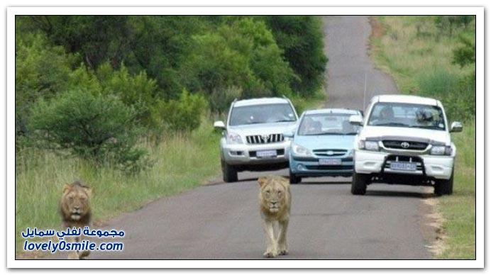 فقط في أفريقيا
