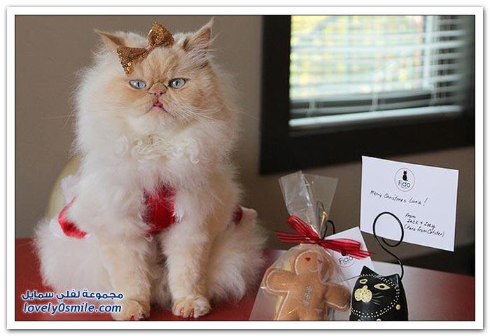قطـــه باخر زمــن لاتفوتــــكــم Pampered-cats-46.jpg