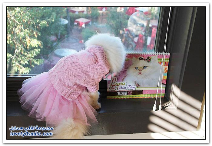 قطـــه باخر زمــن لاتفوتــــكــم Pampered-cats-56.jpg
