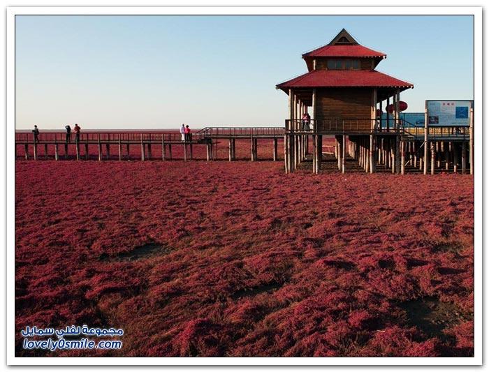 الشاطئ الأحمر الصين
