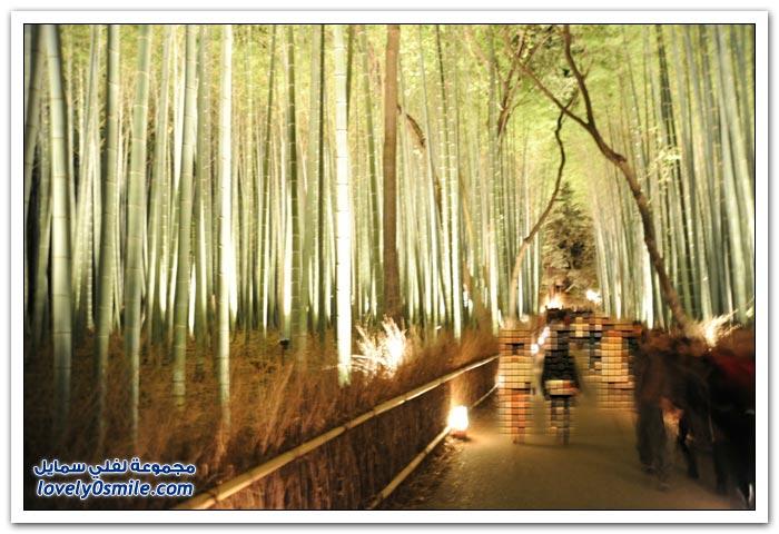 نفق الخيزران في مدينة كيوتو في اليابان
