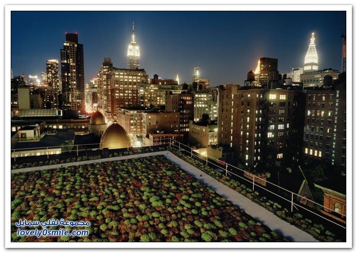 أسقف مزروعة وكأنها حدائق في مدينة نيويورك