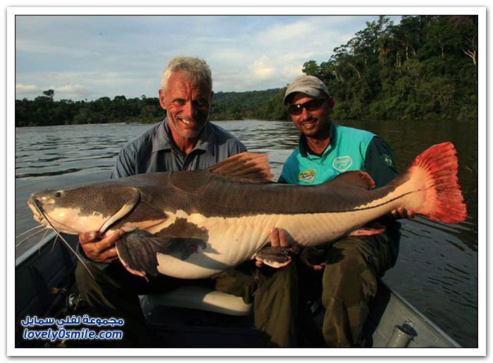 أسماك الأنهار القاتلة