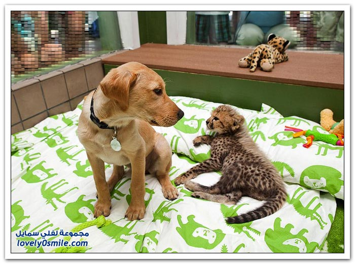 صداقة كلب وفهد