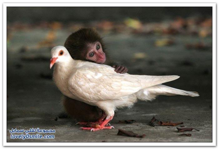 صداقات غريبة لبعض الحيوانات