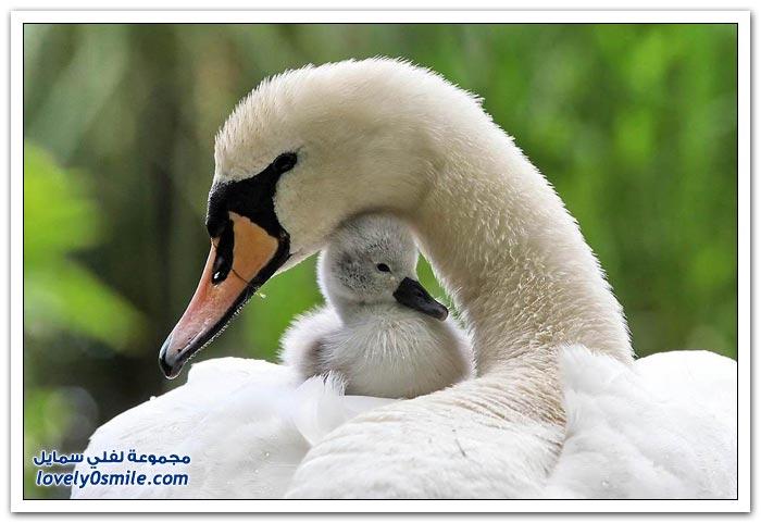 صور رائعة للطيور حول العالم