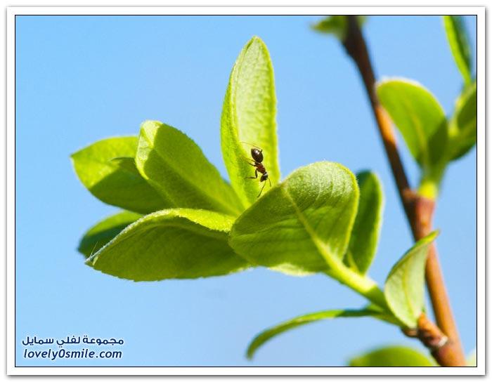 صور عالية الدقة لبعض الحشرات ج5
