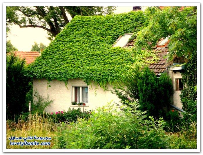 منازل مزينة بالشجر