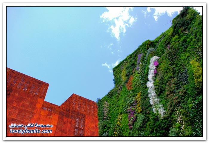 تثبيت الأشجار على جدران المباني في أحد مدن فرنسا