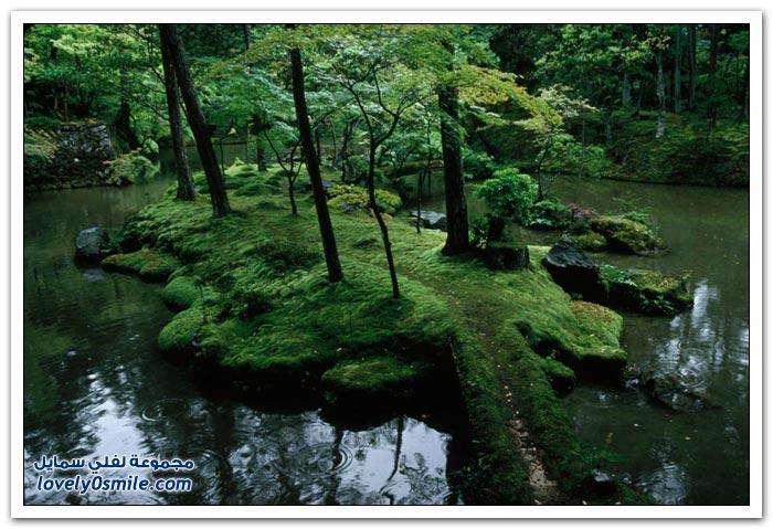 حديقة الطحالب في saiho في اليابان