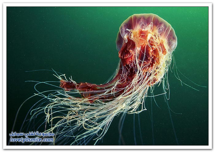 الكائنات الحية في أعماق البحار ج4