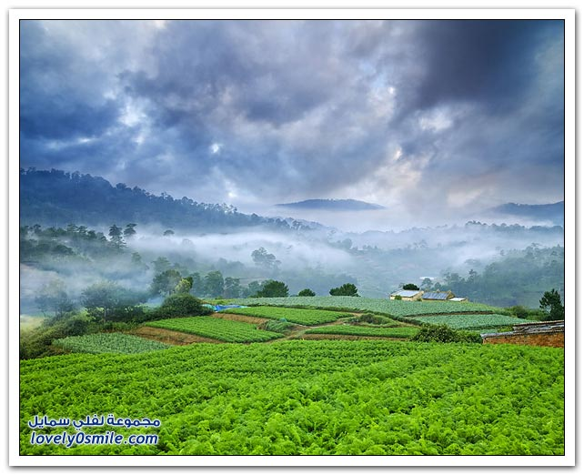 صور من فيتنام